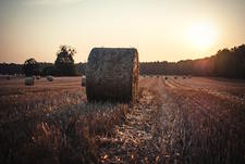 Image of hay bales in field